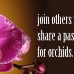 Passion for Orchids