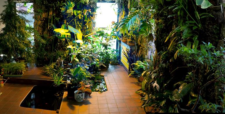 Urban Orchids, courtesy Ian Ross