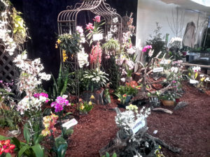 Orchid Society Of Middle Tennessee